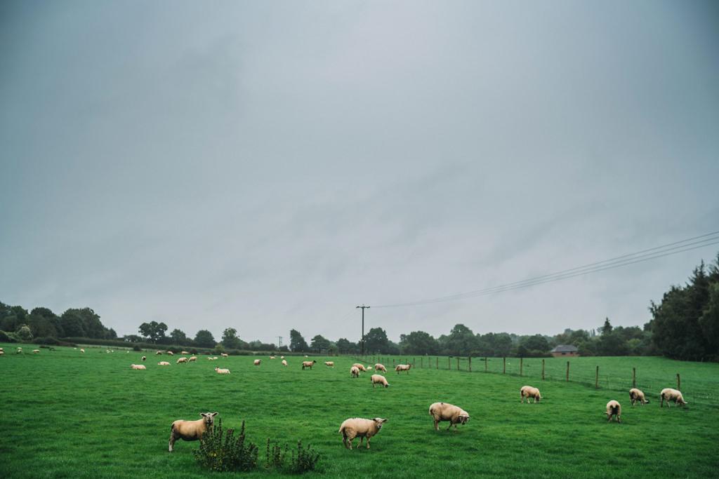 mapperley-farm-punk-wedding-elvis-94003